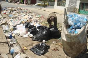 2010 Auf der Suche nach Nahrung im Müllhaufen